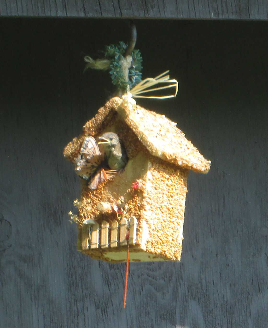 Bird Birdie Cottage All Season 3 Pack Mr